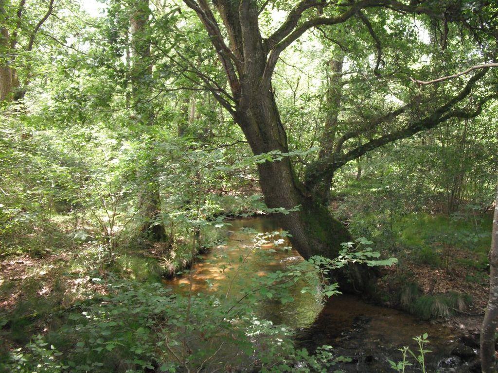 l ecogeste qui sauve la nature